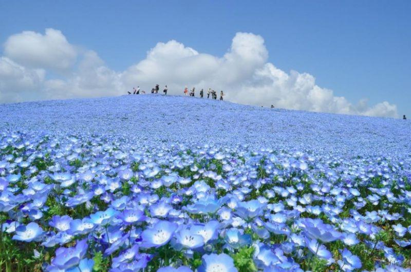 blue-flower7-830x551