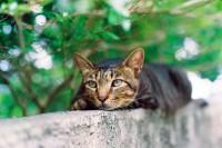 投稿作品No.2274 猫