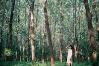 投稿作品No.2449 天蓝与绿光森林