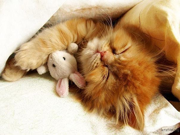 激萌治愈系宠物摄影! 24张小动物抱玩偶的超可爱睡姿