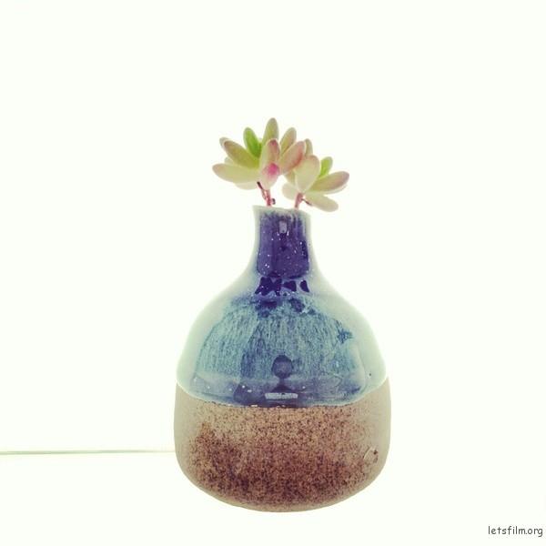 盆栽,磨砂玻璃后面打逆光,作者:叶飞 / Y.Phoenix