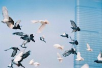 投稿作品No.2889 鳥 · 飛ぶ · 自由