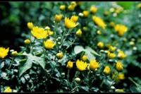 投稿作品No.3057 植物一组