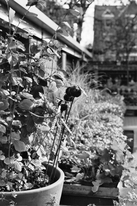 伦敦 邱园
