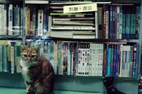Vol.42 前路漫漫——香港 I
