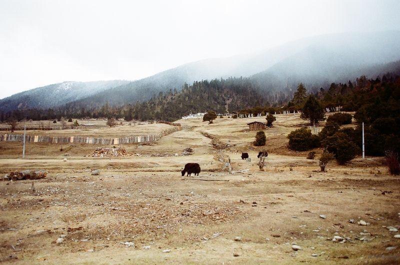 孤独的羊群