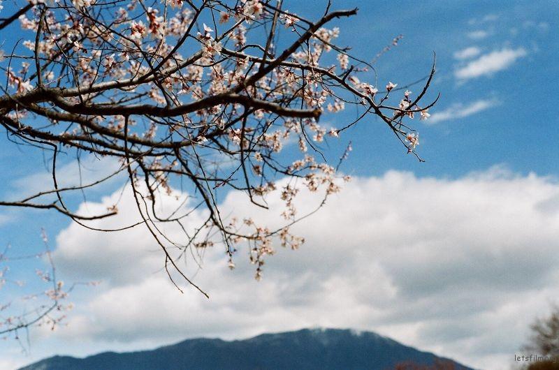 云很低 花兒鮮豔