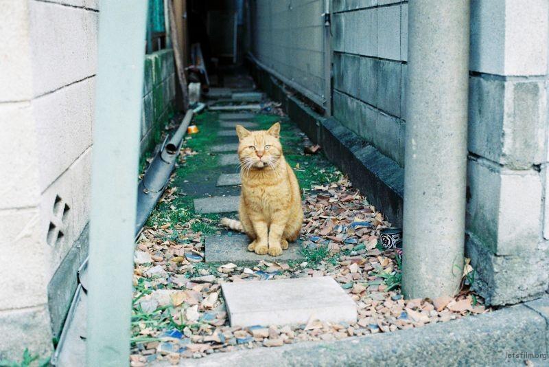 现实版加菲猫