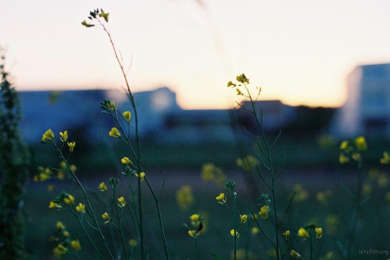 8、暮色中的野花