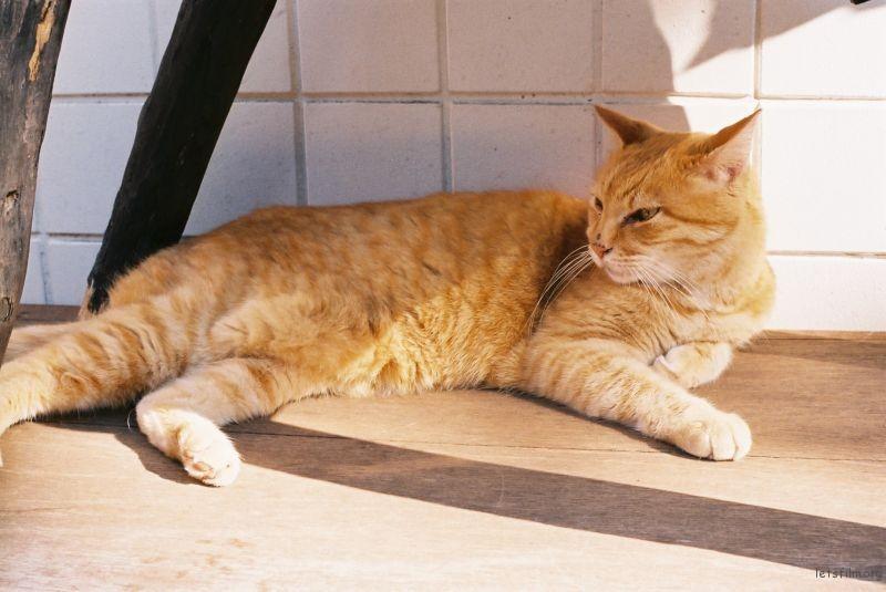下山途中遇到的猫,似乎很舒服的样子。