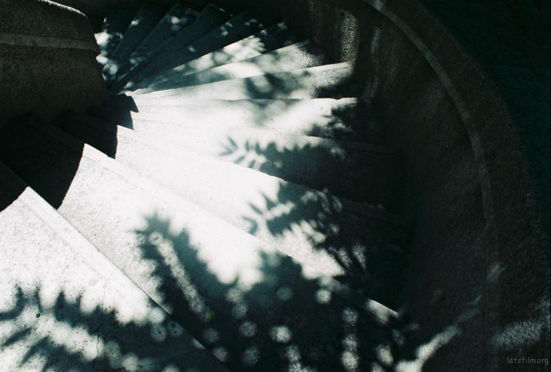 下午 樹的影子。