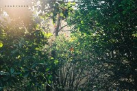 投稿作品No.3678 绿光森林