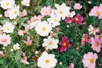 投稿作品No.3910 早春の花