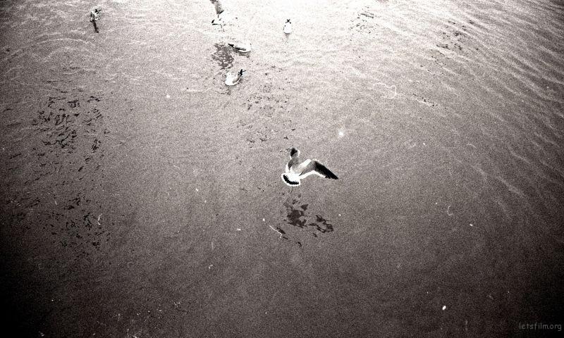 滨海公园,抢食吃的海鸥。