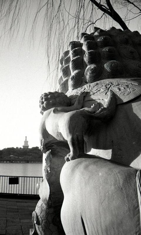 母狮子和小狮子,对望白塔不知有多少岁月了。