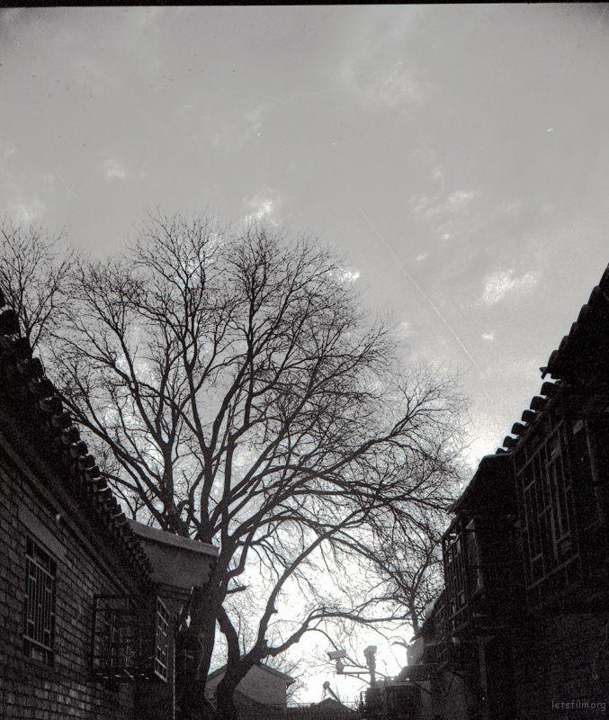 胡同里面树,总是千奇百变,在傍晚的阳光下,显得格外硬朗。