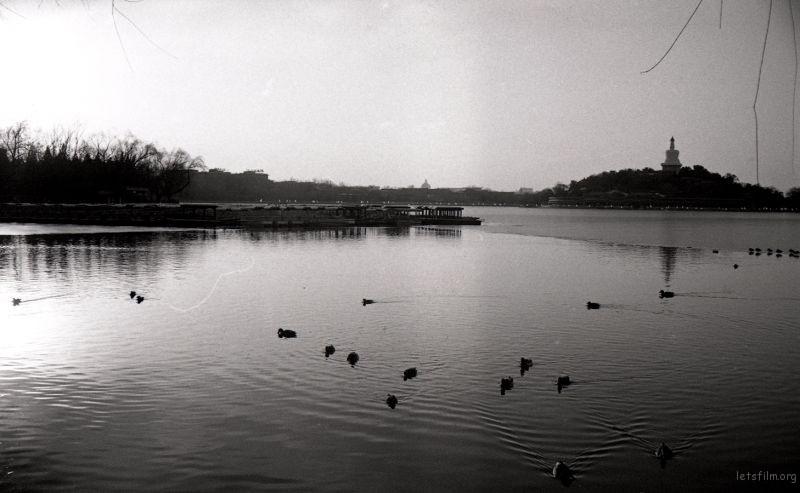 一群鸳鸯,懒洋洋的趴在水面上。