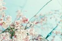 桜、迷途七日