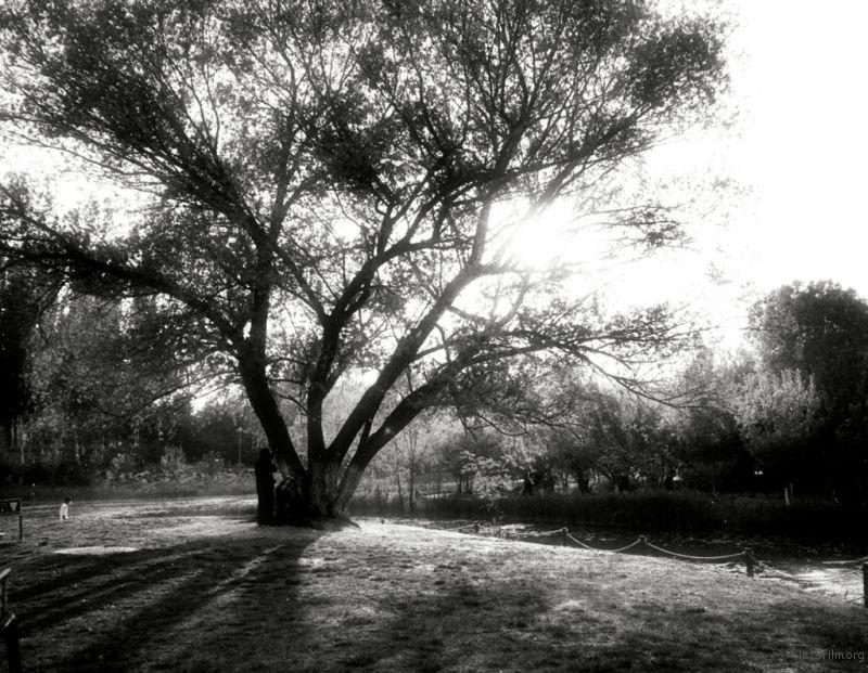 夕阳,通过阳光,呈现出大树的轮廓。