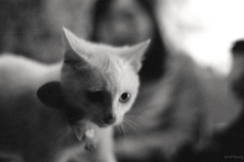 黑白生活(9)