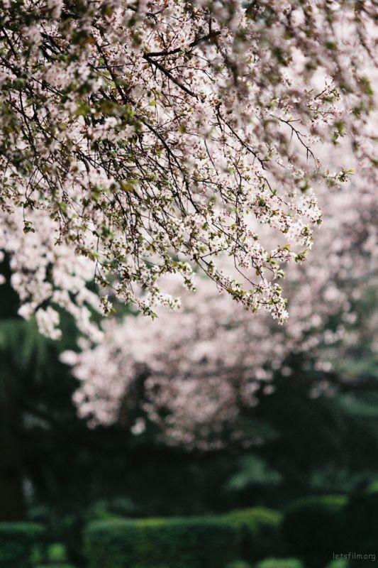 fm2樱花-12