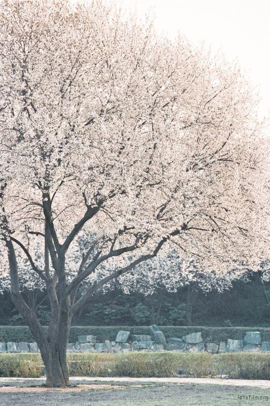 fm2樱花-18