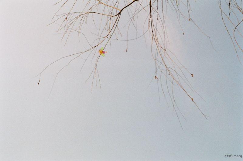 喜欢听陈奕迅唱消失于睛朗。每个人手里都有一只风筝,收收放放。