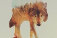 动物与它们生存家园的精美融合——双重曝光影像