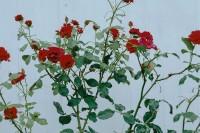 投稿作品No.4841 雨天的植物们