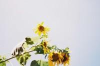 投稿作品No.4672 遠い夏の日
