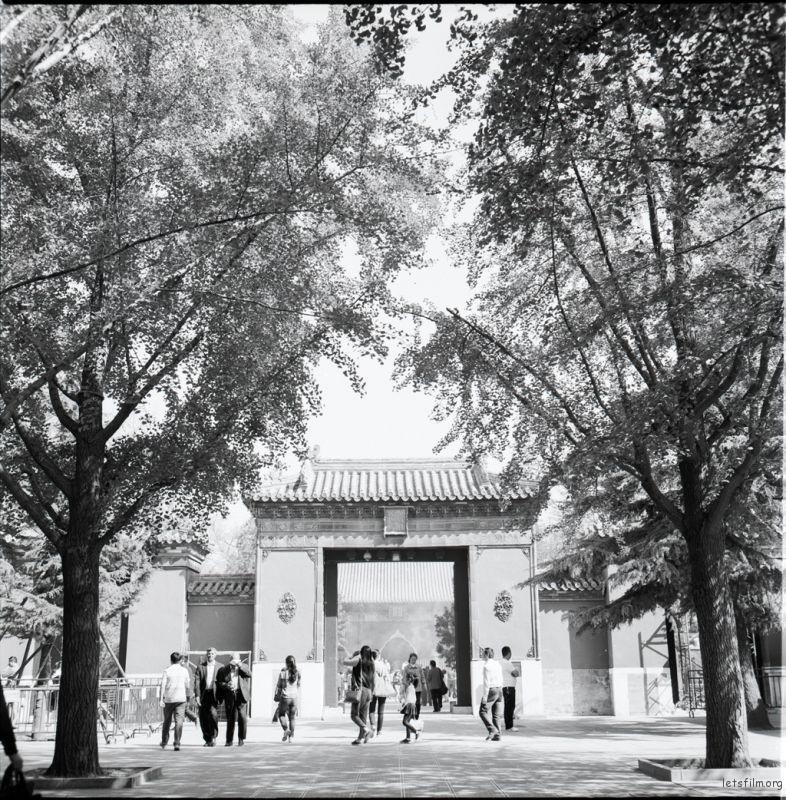 雍和宫大殿正门口,几对苍天大树,遮天蔽日,给夏天带来无数凉爽。