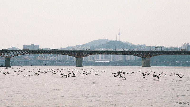 拍摄于2015年6月南韩,Nikon F60 拍摄 南韩首都首尔市,汉江上惊起一滩鸥鹭
