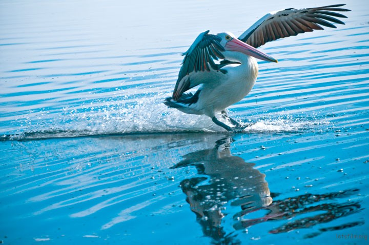 189-Pelican-The-Entrance-Central-Coast-NSW-Australia