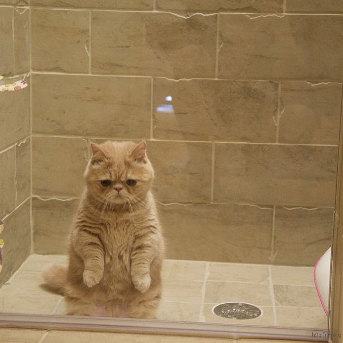 adaymag-meet-george-the-adorable-cat-who-loves-standing-like-a-human-05
