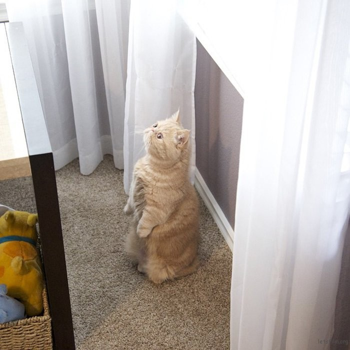 adaymag-meet-george-the-adorable-cat-who-loves-standing-like-a-human-08