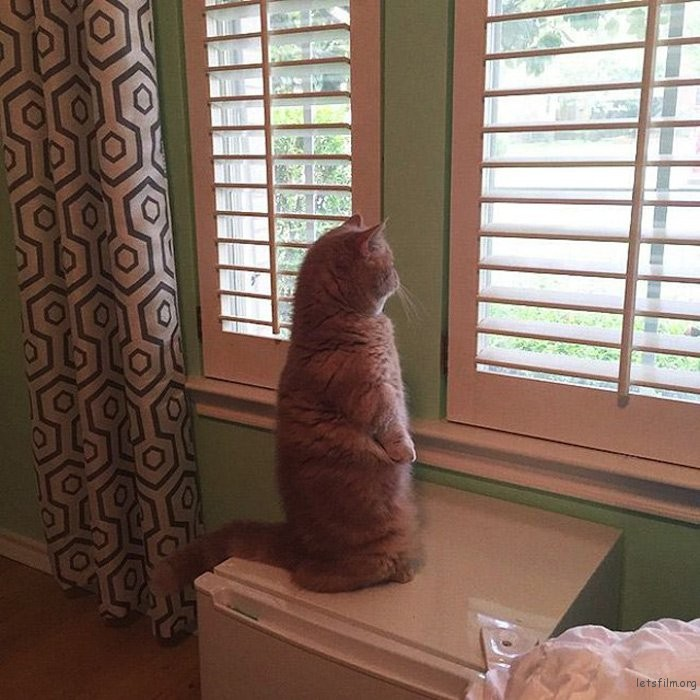 adaymag-meet-george-the-adorable-cat-who-loves-standing-like-a-human-11