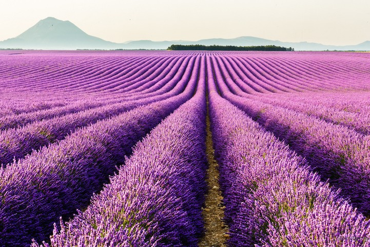 lavenderfields1LocLagarde