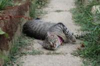 猫咪小呆的世界