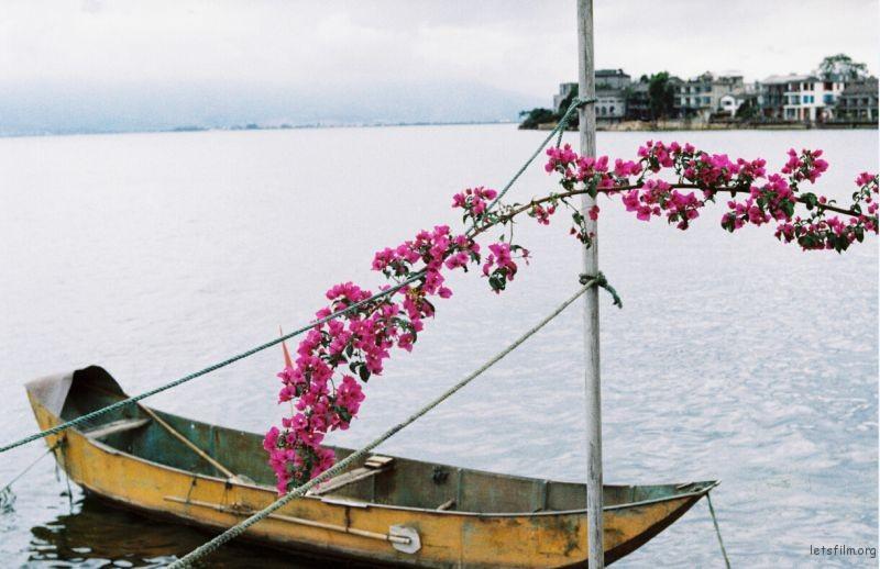 洱海,船,花