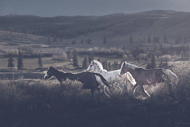 Wild-Horses-Photography1-900x600