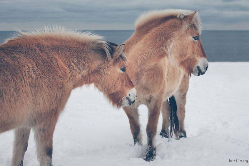 Wild-Horses-Photography13-900x600
