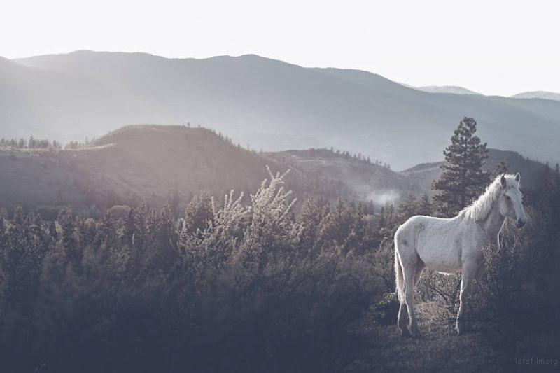 Wild-Horses-Photography2-900x600