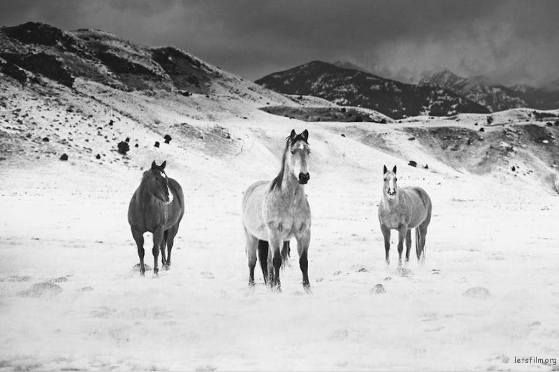 Wild-Horses-Photography3-900x600
