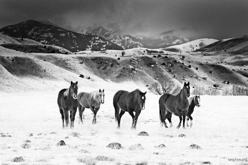 Wild-Horses-Photography4-900x600