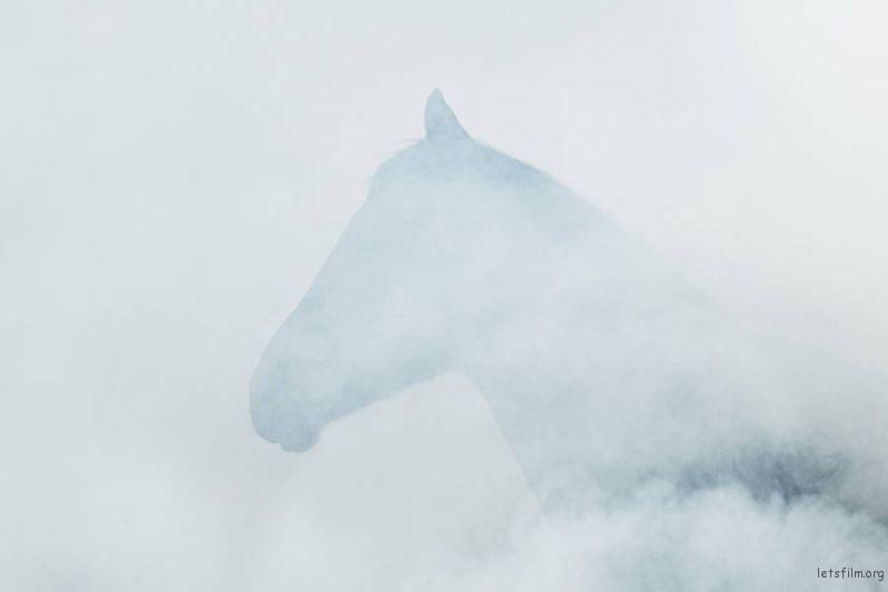 Wild-Horses-Photography7-900x600