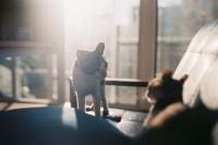 与猫邂逅的夏天
