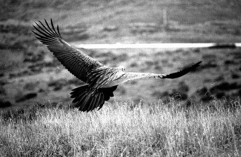 一路可见御风霸气闲荡的神鸟