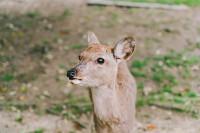 投稿作品No.6020 奈良与鹿