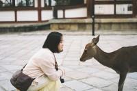 鹿与爱丽丝