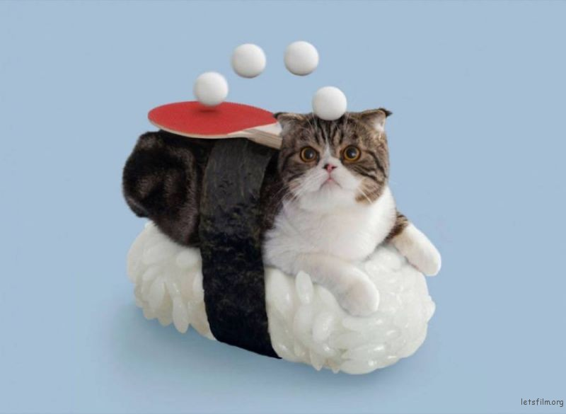 catssuhis5-900x659